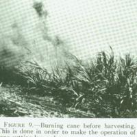 [097] Burning Sugar Cane