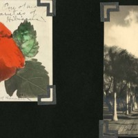 Page 29: Hibiscus and Punahou Palm Row