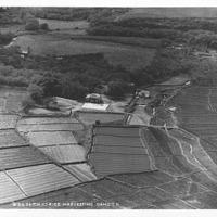 B-2435 Rice Harvesting