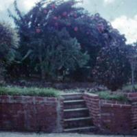 Circular garden plot outside Capt. Holt's (1). Saipan,…