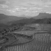 625. Above Pinglow (?) : rice terrace
