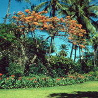 Royal Hawaiian grounds, Waikiki. June 1951