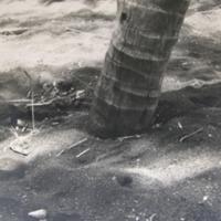 Black Sand & Palm