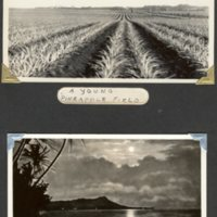 Page 25: Pineapple field, Waikiki