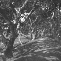 131. Lichee (horizonal image)