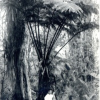 [A man leaning against a giant fern]