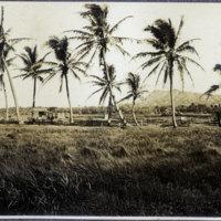 Marsh or field