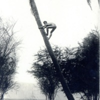[A man climbing a palm tree]