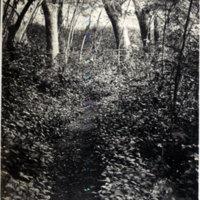 Pathway through woods