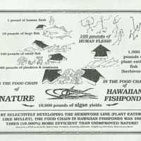 In the food chain of Hawaiian fishponds