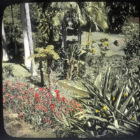 Scene in Lowrey Garden, Honolulu, with red flowers in…