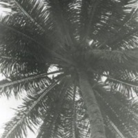 Looking up from the blanket on the beach at Tumon Bay -…