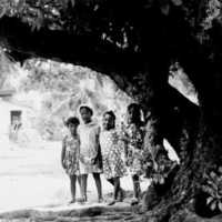 Roi-Namur girls under tree, 1969. (N-2796.02).