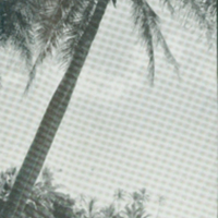 [090] Honaunau, Kona