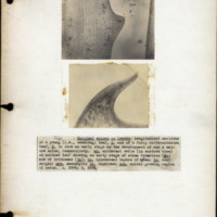 Page 71 – Marginal spines on leaves