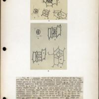 Page 59 – Stomata