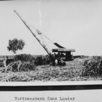 Northwestern Cane Loader