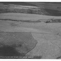 B-129-1-11 Sugar Cane Fields