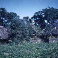Huts blocked by trees