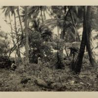 [0070 - Arno Atoll, Marshall Islands]