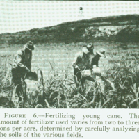 [094] Fertilizing Young Cane