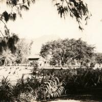 Waikiki - Kapiolani Park?