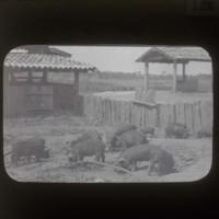Livestock: [家畜]