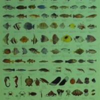Ikan Hias Air Laut di Indonesia