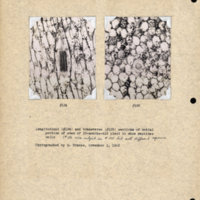 Physiology-Soils PM Negatives 134-135