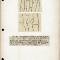 Page 52 – Leaf hypodermis