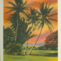 "[056] ""Moanalua Palms"", Hawaii"