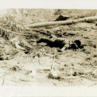 A soldier killed in battle, Okinawa