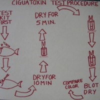 Ciguatoxin test procedure