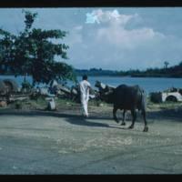 Palau '52