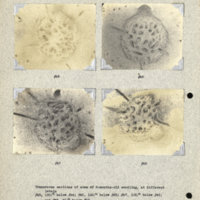 Physiology-Soils PM Negatives 045-048