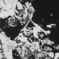 Bone on reef, under water