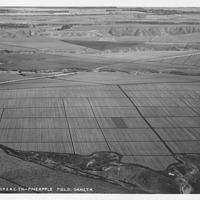 B-128-1 Pineapple Fields
