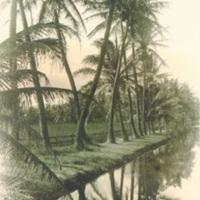 [Palm trees]