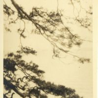 Kaizawa 2-061: Scenic shot of a Japanese pine tree in…
