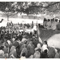 Gathering under tree, with camel