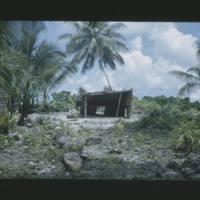 Small shelter that Janji built on his bukon on Jojaia's…