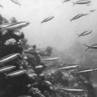 Fish against reef