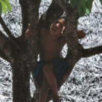 Boy in Plumeria Tree - 3