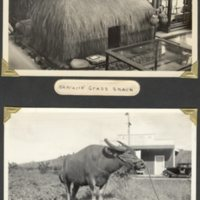 Page 24: Hawaiian grass shack and water buffalo