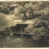 Carp pond at hotel in Matsushima Japan