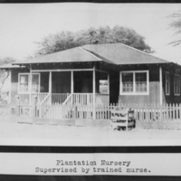Plantation Nursery - Supervised by trained nurse