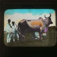 Livestock and people: [家畜と人物]