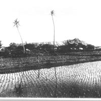 Diamond head from Waikiki rice fields