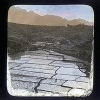 Flooded rice paddies