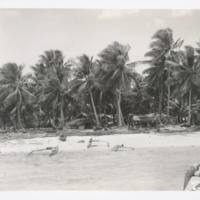 [0411 - Rongelap Atoll, Marshall Islands]